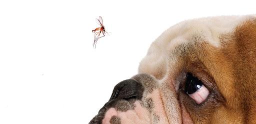 cane con zanzara prevenzione Leishmaniosi e Filariosi